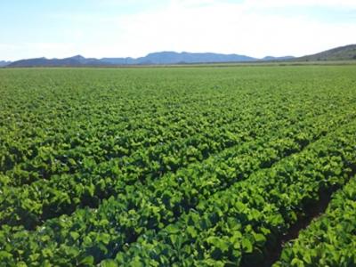 Agroindustria hortofrutícola Agromark
