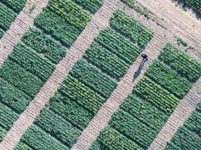 Master en Gestión de Agroindustria y Agronegocios