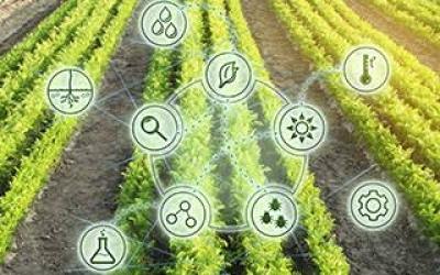 Gestión de la innovación de la empresa agroalimentaria