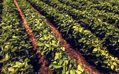Uso de Microorganismos aplicados a la Agricultura