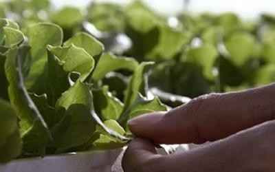 Programa Ejecutivo en Dirección de Producción Agroalimentaria