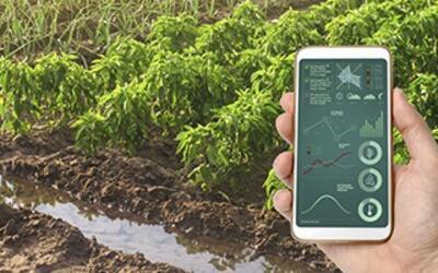 Programa Ejecutivo en estrategia innovación y digitalización de empresas agroalimentarias